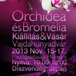 orchideakiallitas2013